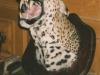leopard-head